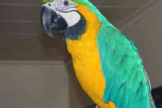 Cute Macaw Parrots , 8 Cool Macaw Rescue In Birds Category