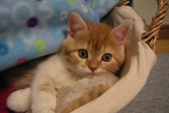 Cutest Kitten Ever , 7 Top Cutest Cat Picture Ever In Cat Category