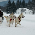 Dog Sled , 4 Unique Dog Sled Pictures In Dog Category