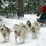Dog Sledding , 4 Unique Dog Sled Pictures In Dog Category