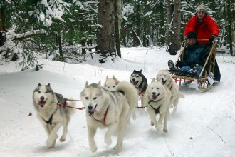 Dog Sledding in Skeleton