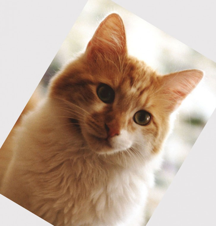 Cat , 7 Beautiful Cat Breeds With Pictures : Domestic Cat Breeds