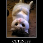 Funny Pictures Cats , 8 Cute Cat Pictures With Captions In Cat Category