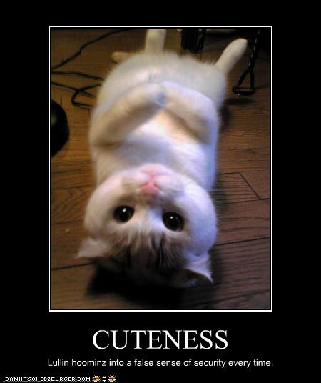 Cat , 8 Cute Cat Pictures With Captions : Funny Pictures Cats