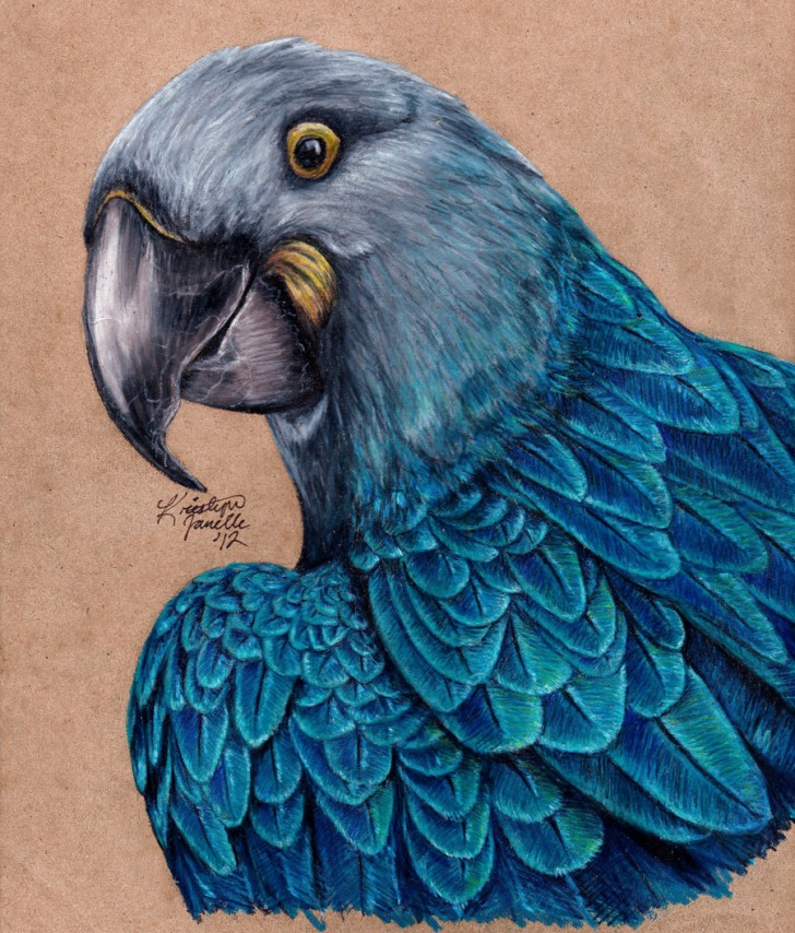 Birds , 7 Lovely Glaucous Macaw : Glaucous Macaw