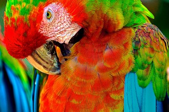 Green Wing Macaw in Dog