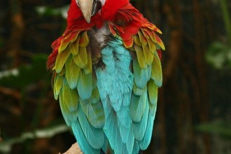 Green Winged Macaw in Plants