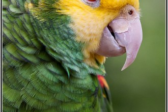 Green wing Macaw in Plants