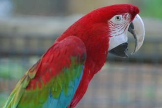 Green winged Macaw in Dog