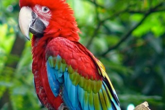 Green winged Macaw in Cell