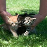 Herding Cats , 5 Excellent Herding Cats Picture In Cat Category