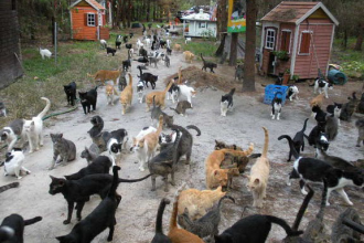 Herding Cats in Dog