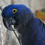 Hyacinth Macaw , 7 Nice Parrot Cage Hyacinth Macaw In Birds Category