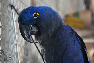Hyacinth Macaw in Spider