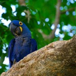 Hyacinth Macaw Bird , 7 Nice Parrot Cage Hyacinth Macaw In Birds Category