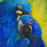 Hyacinth Macaw Pair Blue , 8 Wonderful Blue Hyacinth Macaw In Birds Category