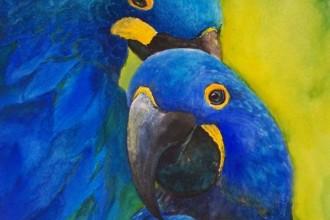 Hyacinth Macaw Pair Blue , 8 Wonderful Blue Hyacinth Macaw In Birds Category