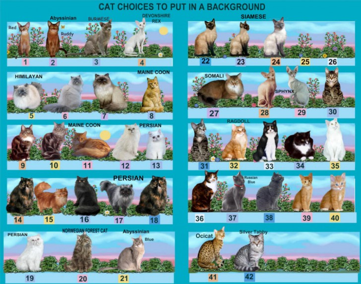 Cat , 6 Best List Of Cat Breeds With Pictures : List Of Cat Breeds