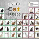 List of Cat Breeds , 6 Best List Of Cat Breeds With Pictures In Cat Category