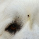 Lyme disease , 6 Stunning Lyme Disease In Dogs Pictures In Dog Category
