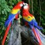 MACAW PARROTS , 8 Cool Macaw Rescue In Birds Category