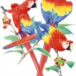 MaCaw Parrot , 7 Nice Parrot Clipart In Birds Category