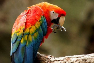 Macaw , 7 Good Macaw Lifespan In Birds Category