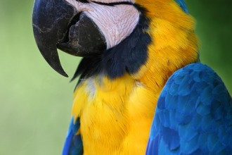 Macaw Bird Pictures , 8 Beautiful Macaw Facts In Birds Category