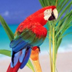 Macaw Birds , 7 Cool Pictures Of Macaws In Birds Category