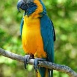 Macaw Fact , 8 Beautiful Macaw Facts In Birds Category