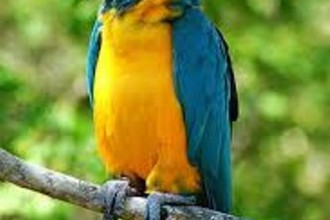Macaw Fact in Butterfly