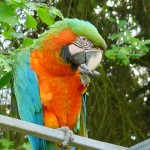 Macaw Parrot , 7 Good Macaw Lifespan In Birds Category