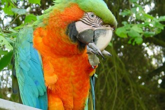Macaw Parrot in Dog