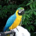Macaw Parrot Parrot Birds , 7 Top Mccaw Parrot In Birds Category