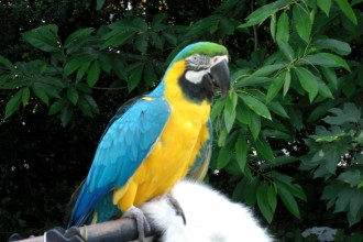 Macaw Parrot Parrot Birds , 7 Top Mccaw Parrot In Birds Category