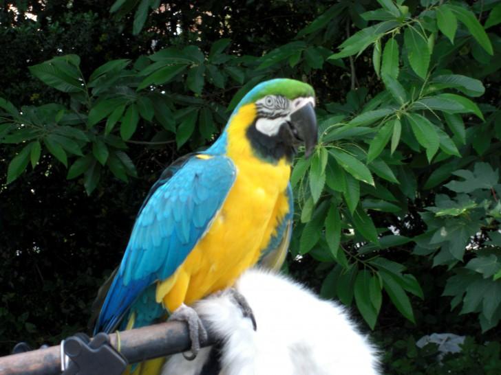 Birds , 7 Top Mccaw Parrot : Macaw Parrot Parrot Birds