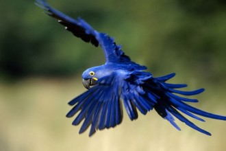 Macaw Pictures , 7 Cool Macaw Facts For Kids In Birds Category