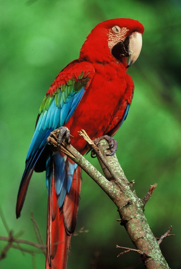 Birds , 7 Cool Pictures Of Macaws : Macaws