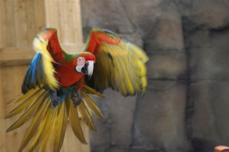 Macaws images in Cell