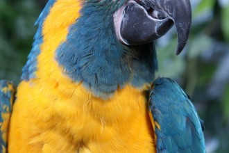 Makari the blue Throated Macaw in Dog