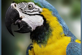 Mccaw Parrot in Scientific data