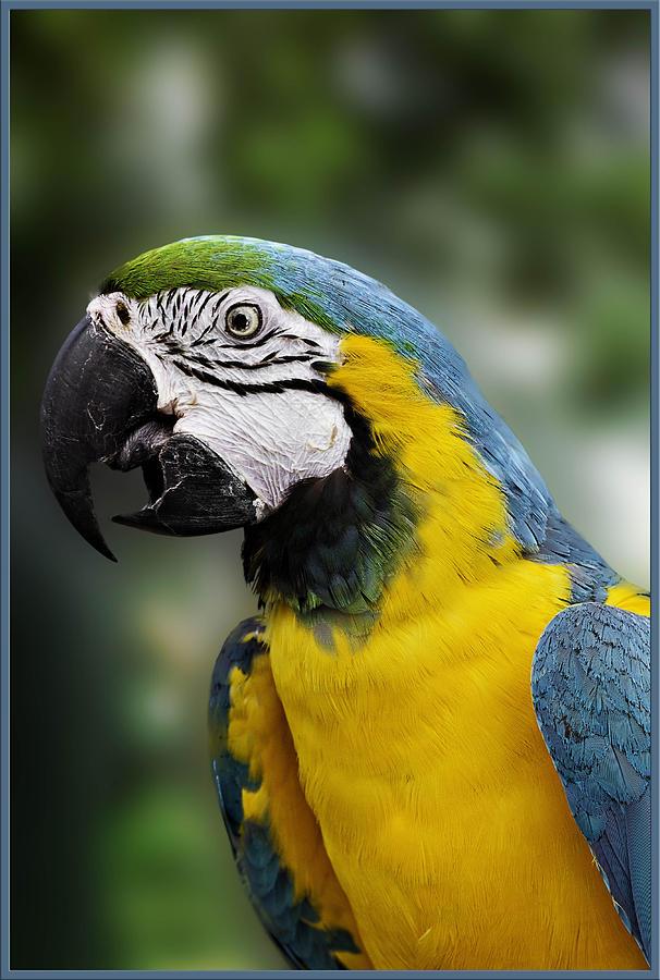 Birds , 7 Top Mccaw Parrot : Mccaw Parrot