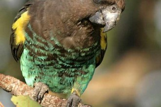 Meyers Parrots in Scientific data