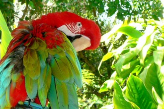 Parrot Jungle Florida , 7 Beautiful Parrot Jungle Miami In Birds Category
