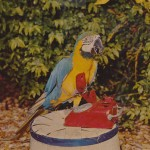 Parrot Jungle Miami , 7 Beautiful Parrot Jungle Miami In Birds Category