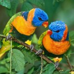 Parrot Life Span , 6 Beautiful Parrot Lifespan In Birds Category
