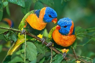 Parrot Life Span in Plants