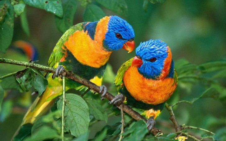 Birds , 6 Beautiful Parrot Lifespan : Parrot Life Span