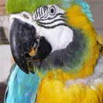 Parrot Rescue , 8 Cool Macaw Rescue In Birds Category