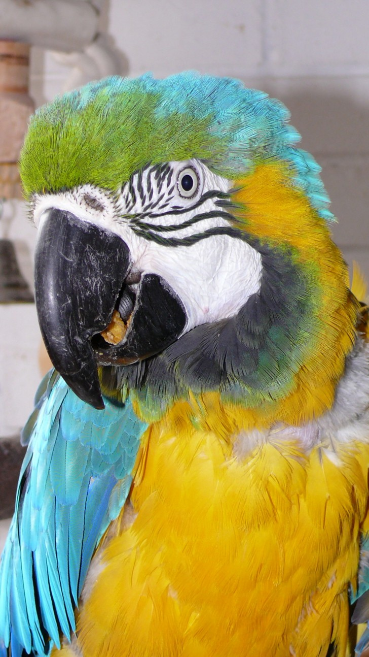Birds , 8 Cool Macaw Rescue : Parrot Rescue